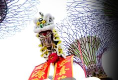 Lion Dance Singapore  a dance of strength!