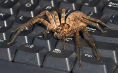 spider  free for desktop