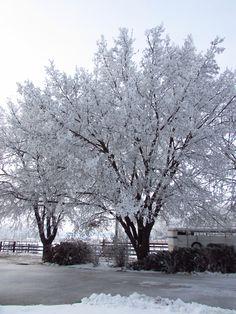 Christmas in Emmett Idaho