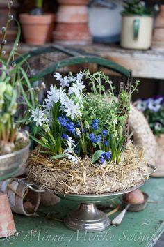 Blomsterverkstad: Ett doftande vårarrangemang