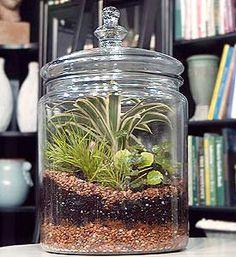 terrarium in an apothecary jar.