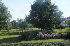 widok ogrodu z tarasu kawiarni