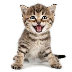 Montpellier : un chaton parcourt 500 km sous le capot d'une voiture et s'en sort indemne!