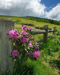 at the lone flowers on the fence.