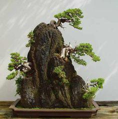 arboles bonsai