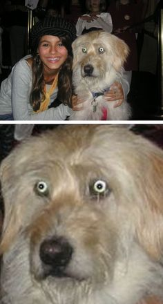This girl and her TERRIFIED dog. | The 49 Most WTF Pictures Of People Posing With Animals