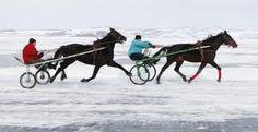 Of een mooie ijsderby met paarden.