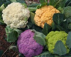 IMG_8772_cauliflower-1024x830