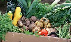 Green living blog + Food | Environment | The Guardian