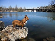 Austin TX Dog Friendly City