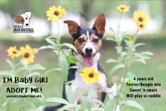 This sweet, little girl is a ray of sunshine to everyone! #AdoptTerrier