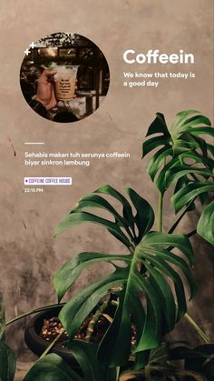Instagram Story, Deep Talks, Coffee Instagram, Vsco Photography, Ig Story, Trekking, Diy Fashion, Plant Leaves, Design Inspiration