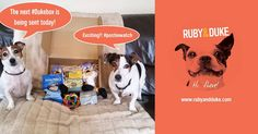 Any #dogs out there excited about October's Ruby & Duke #Dukebox? www.rubyandduke.com  #dogsofinstagram #dogsofinsta #dogsofig #dogstagram #dogs #dogsrule #doglove #doglovers #doglife #dogoftheday #doggy #doglover #doggie #dogscorner #dogofinstagram #dogsofinsta #dogwalk #dog_features #doggies #dogsandpals #dogloversofinstagram #dogdays #dogsofinstaworld #dogfessional #dogwalker #doggrooming #dogcrushdaily #dogslover Dog Walking, Dog Grooming, Dog Toys, Dog Life, Duke, Doggies, Dog Lovers, Instagram Posts, Pet Dogs