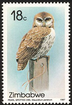 Pearl-spotted Owlet stamps - mainly images - gallery format
