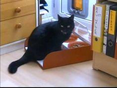 Der Schutz-Fressnapf eignet sich für Katzen und kleine Hunde und funktioniert auf rein mechanischer Basis. Betritt das Tier die Auftrittsfläche, so öffnet si...