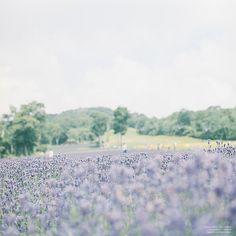 たんばらラベンダーパーク   Flickr - Photo Sharing! Beautiful World, Beautiful Places, Beautiful Pictures, Art Anime, Background Images, Bright Background, Aesthetic Photo, Ikebana, Grunge
