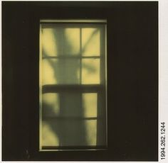 Walker Evans Polaroid Tree Shadow on Shade in Window