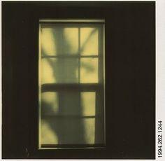 Walker Evans Polaroid Tree Shadow on Shade in Window