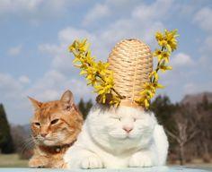 連翹ぼうし|のせ猫オフィシャルブログ Powered by Ameba