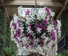 Longwood Gardens - Orchid Extravaganza 2016 - The Orangery https://michaelsphotos.smugmug.com/LONGWOOD-GARDENS/LONGWOOD-GARDENS-ORCHID-EXTRAVAG/