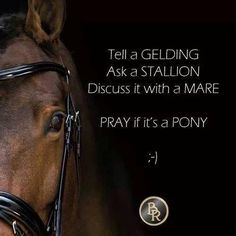 Tell a gelding Ask a stallion Discuss it with a mare Pray if it's a pony Equine Quotes, Equestrian Quotes, Rodeo Quotes, Equestrian Problems, Horses And Dogs, Show Horses, Most Beautiful Animals, Beautiful Horses, Inspirational Horse Quotes