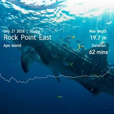 Underwater photo. Scuba diving. Ocean. Diver. Whale shark. Dive log. Apo island