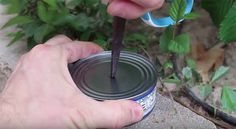 Put A Hole In The Middle Of The Tuna | How to Make a Tuna Oil Lamp | https://survivallife.com/make-tuna-oil-lamp/