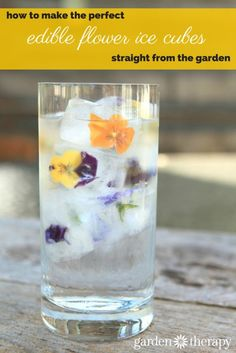 Edible Flower ice cubes  - a few tips to making these gorgeous ice cubes makes for stunning drinks!