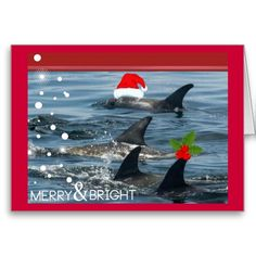 dolphins Merry and bright happy holiday Card