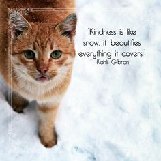 Spread the love! Kahlil Gibran, Pet Health, Monday Motivation, Pets, Quotes, Nature, Animals, Animals And Pets, Quotations