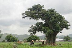 Cena rural em Zebilla, Gana.  Fotografia: Adam Jones, Ph.D.  no Flickr.