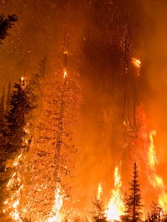The Springs Fire, Banks-Garden Valley, Idaho, Boise National Forest, August burning embers aloft Idaho, Wildland Firefighter, California Wildfires, Wild Fire, Orange Aesthetic, Banks, Fire And Ice, National Forest, Scenery