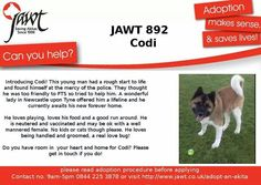 Codi is still waiting for his forever home