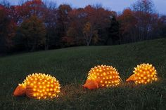 hedgehog pumpkins!!!!
