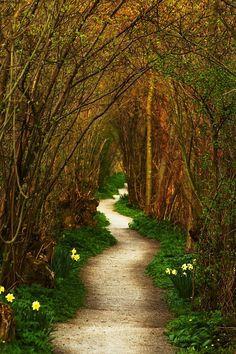 Path in a Tunnel of Trees