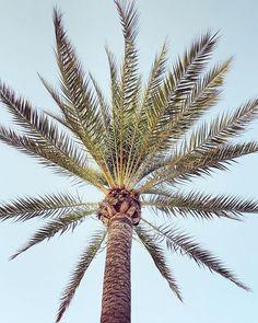 Stay in a state of gratitude and awe . Monday Quotes, Island Life, Spiritual Awakening, Monday Motivation, Travel Quotes, Ibiza, Palm Trees, Gratitude, Amazing