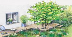 Aus einer Terrasse mit einer langweiligen rechteckigen Fläche aus Waschbetonplatten soll ein pflanzenreicher Platz mit Sitzplatz werden.  Unsere Gestaltungsvorschläge beinhalten zum Einen einen gepflasterten Sitzplatz mit Teichbecken und zum Anderen ein Holzdeck mit integrierten Fächerblatt-Ahorn.
