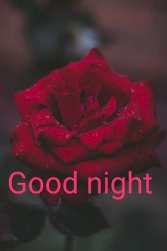 Good Night, Movie Posters, Nighty Night, Film Poster, Good Night Wishes, Billboard, Film Posters