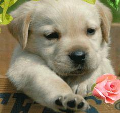 Ver imagen de tierno perrito junto a rosa rosada con movimiento