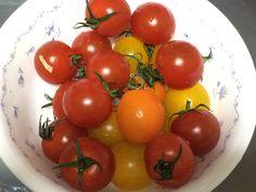 いろんな色のミニトマトは見た目も楽しい