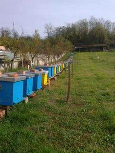Jedan od naših pčelinjaka na Homolju
