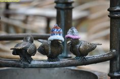 birds with hats :)
