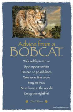 """Be at home in the woods."" Advice from a Bobcat- Wild. Your True Nature Advice Quotes, Life Advice, Good Advice, Advice Cards, Animal Medicine, Animal Spirit Guides, Animal Symbolism, Power Animal, True Nature"
