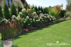 Any ogród mały czyli wygrana walka z ugorem - strona 1750 - Forum ogrodnicze - Ogrodowisko Shade Landscaping, Front Yard Landscaping, Back Gardens, Outdoor Gardens, Landscape Design, Garden Design, Outdoor Projects, Garden Planning, Garden Inspiration