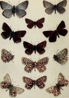 Butterfly Print   Shabby Chic Decor   Girl Nursery Decor   EDMPrintedEphemera