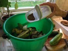 hjälper Gardening For Beginners, Gardening Tips, Kitchen Plants, Green Life, Green Beans, Outdoor Gardens, Composting, Bra, Interior