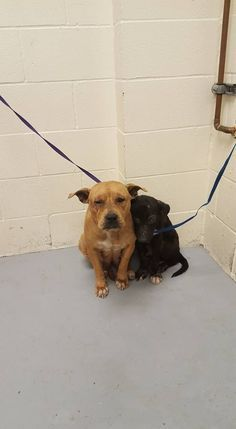 UPDATE: RESCUED❤️❤️❤️ MCAS Pets In Need: They are safe and I will update how they are doing. Frightened pair cling to each other at shelter as their owner walks away Shelter Dogs, Animal Shelter, Rescue Dogs, Animal Rescue, Shelters, Animals And Pets, Funny Animals, Cute Animals, Baby Animals