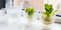 I Quit Sugar - An endless supply of celery? Here's 4 ways to regrow your veggies