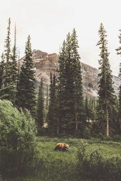 48 Ideas for beautiful nature forest adventure wilderness Camping Photography, Nature Photography, Adventure Photography, Outdoor Photography, Beautiful Landscape Photography, Animal Photography, Travel Photographie, Its A Mans World, Amazing Nature