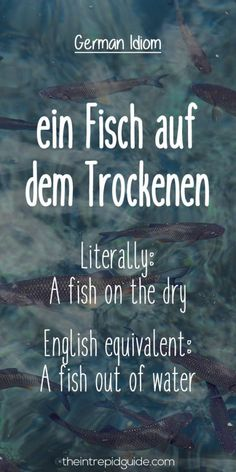 """Don't """"make an ape of yourself"""". Speak like a native with these 27 Hilarious Everyday German Idioms and expressions. Study German, German English, Learn German, Learn French, German Grammar, German Words, German Resources, German Quotes, German Language Learning"""
